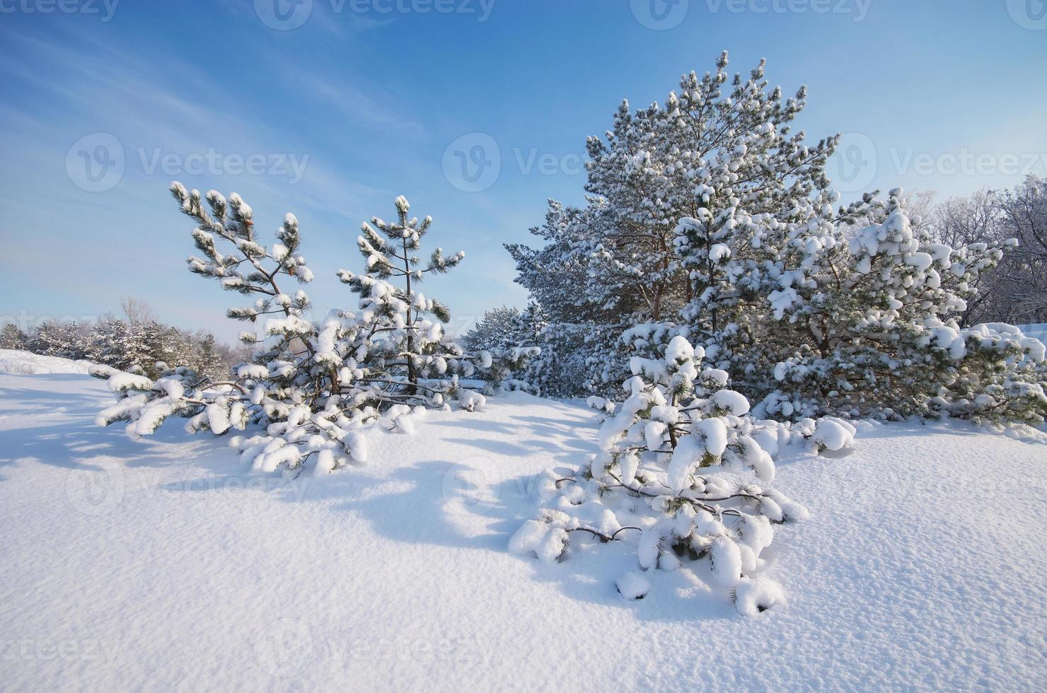 vinterlandskap. foto