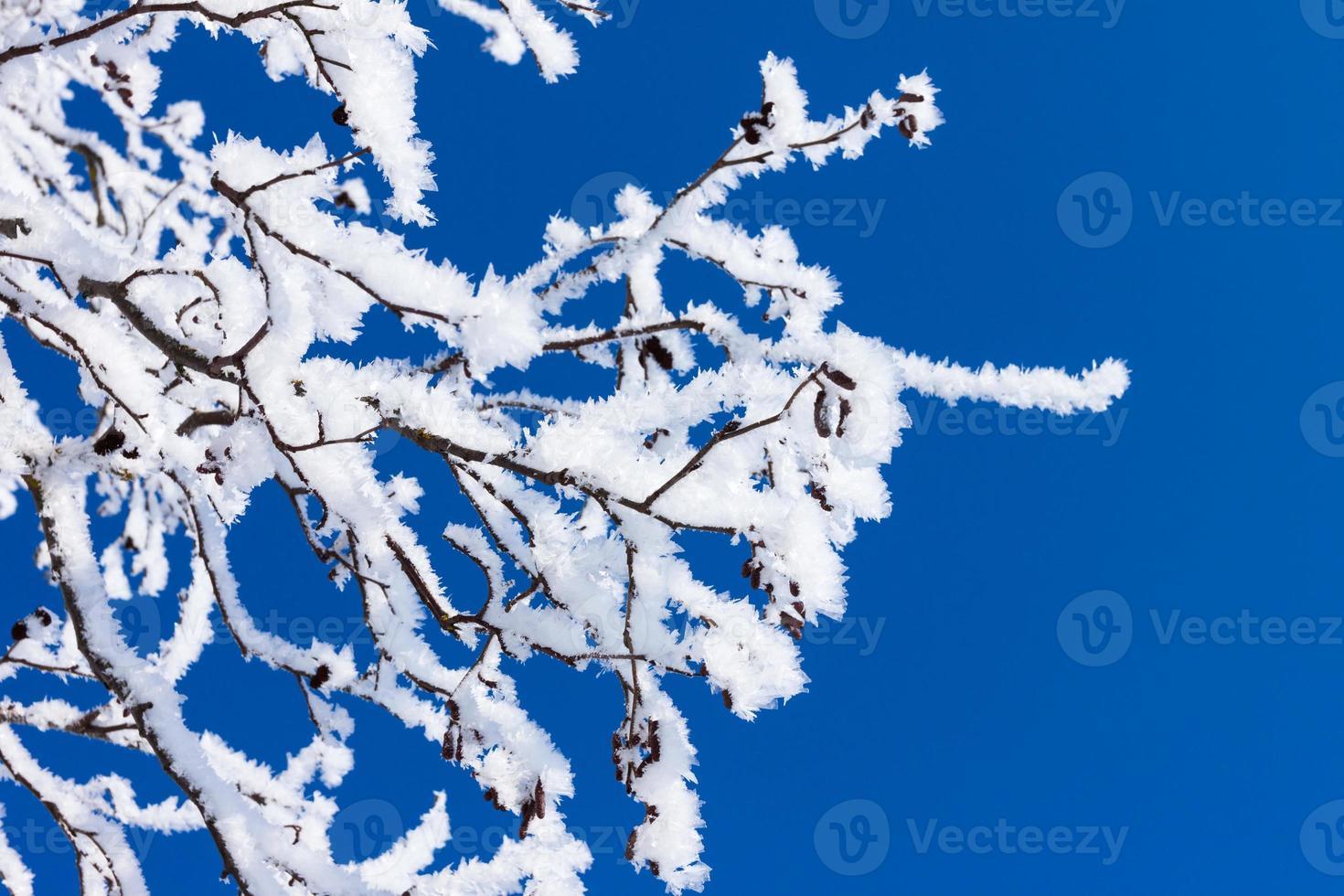 snö vinter träd foto
