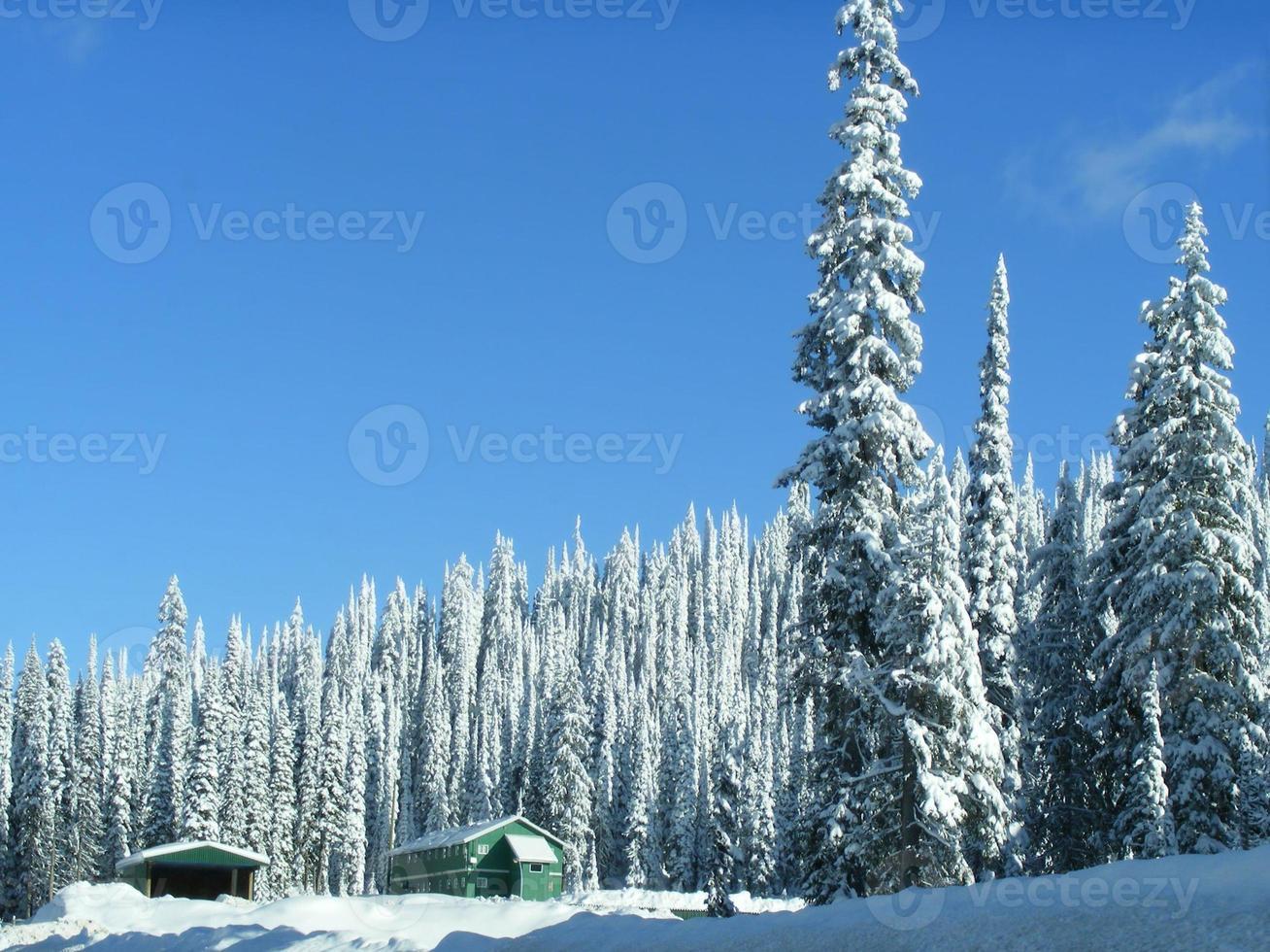 vintern i bergen foto