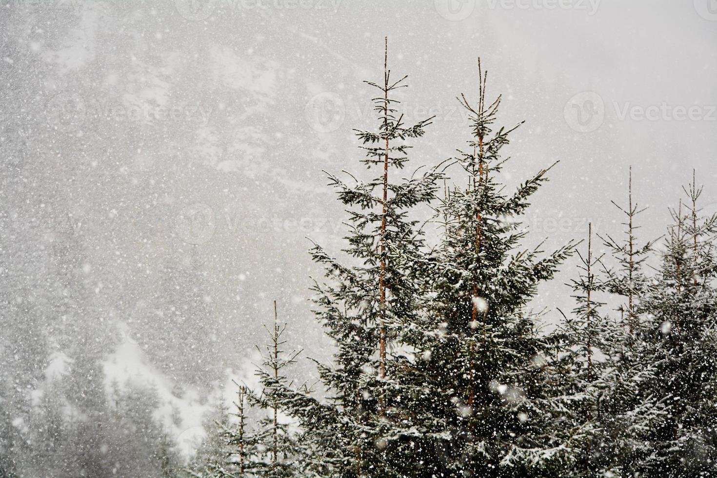 snöfall på vintern foto