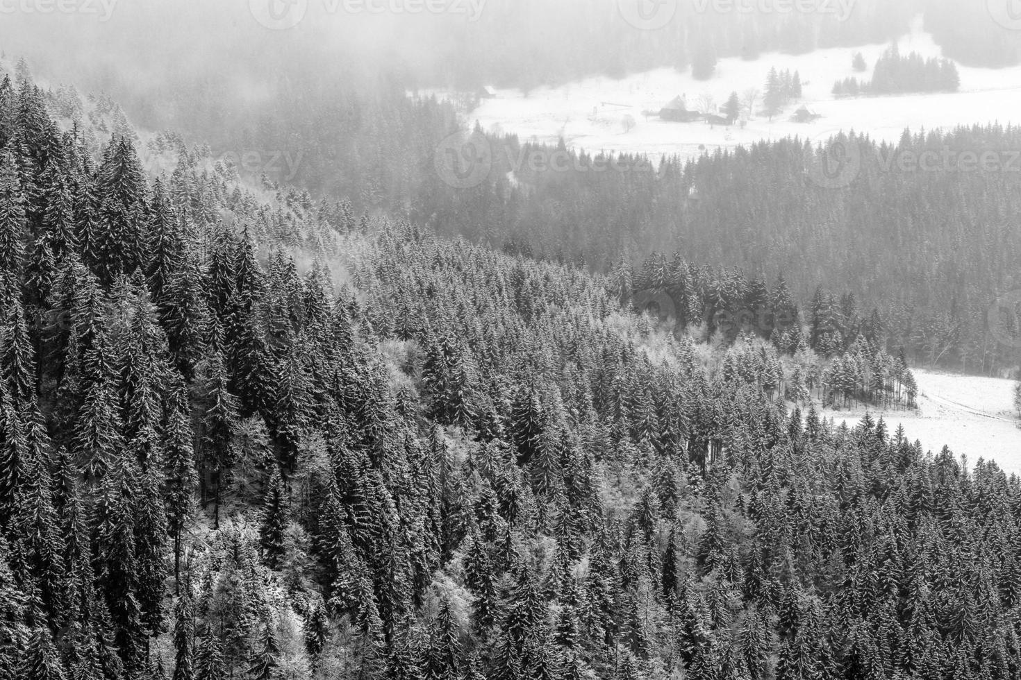 vinter svart skog foto
