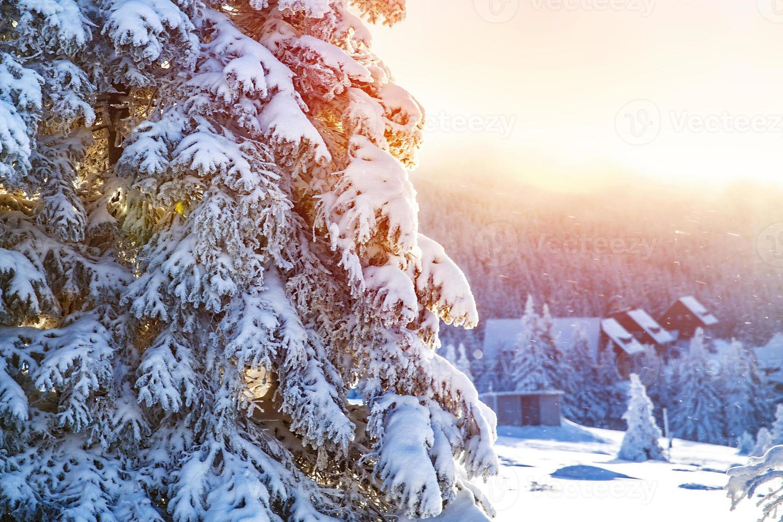 vinter i bergen foto