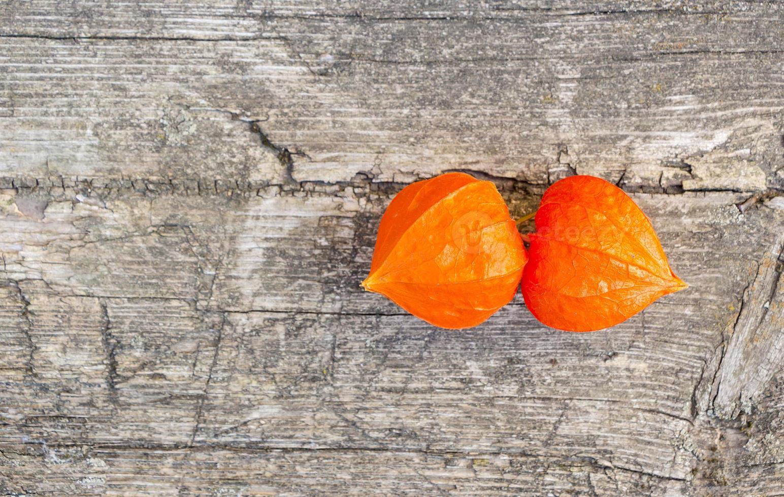 orange vinterkörsbär foto