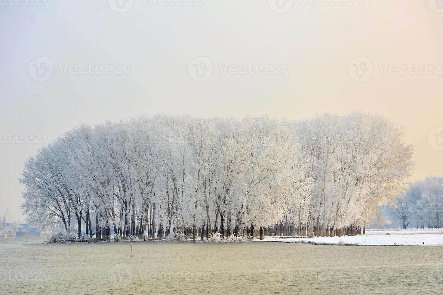 frostigt vinterträd foto