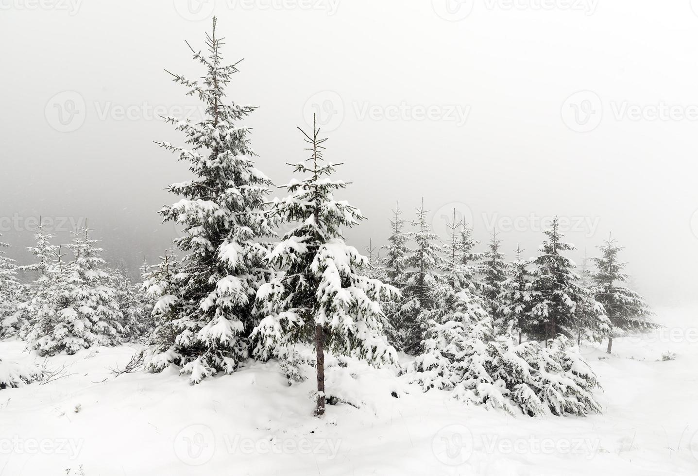 dimmig skog på vintern foto