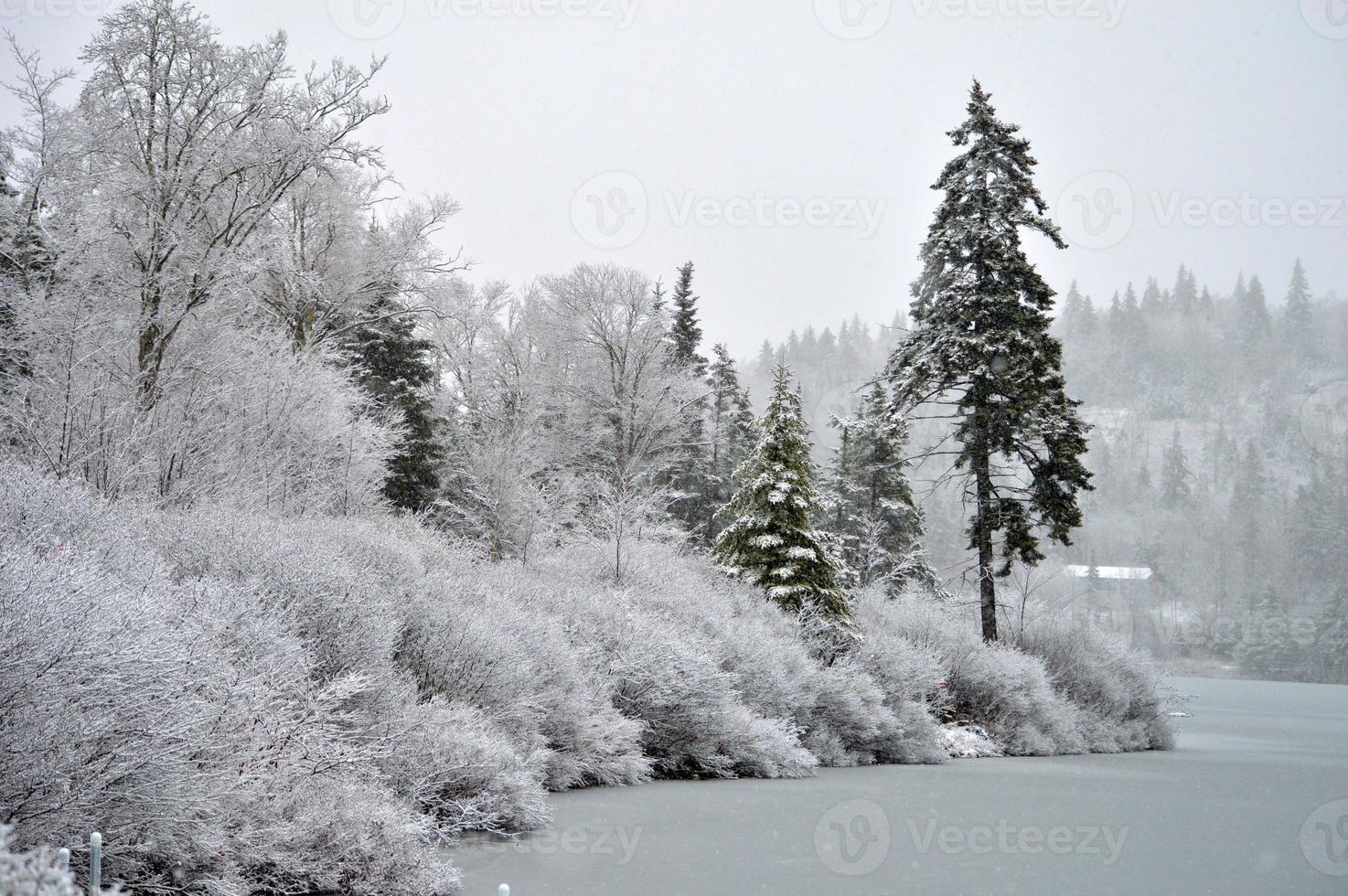 vinter på sjön foto