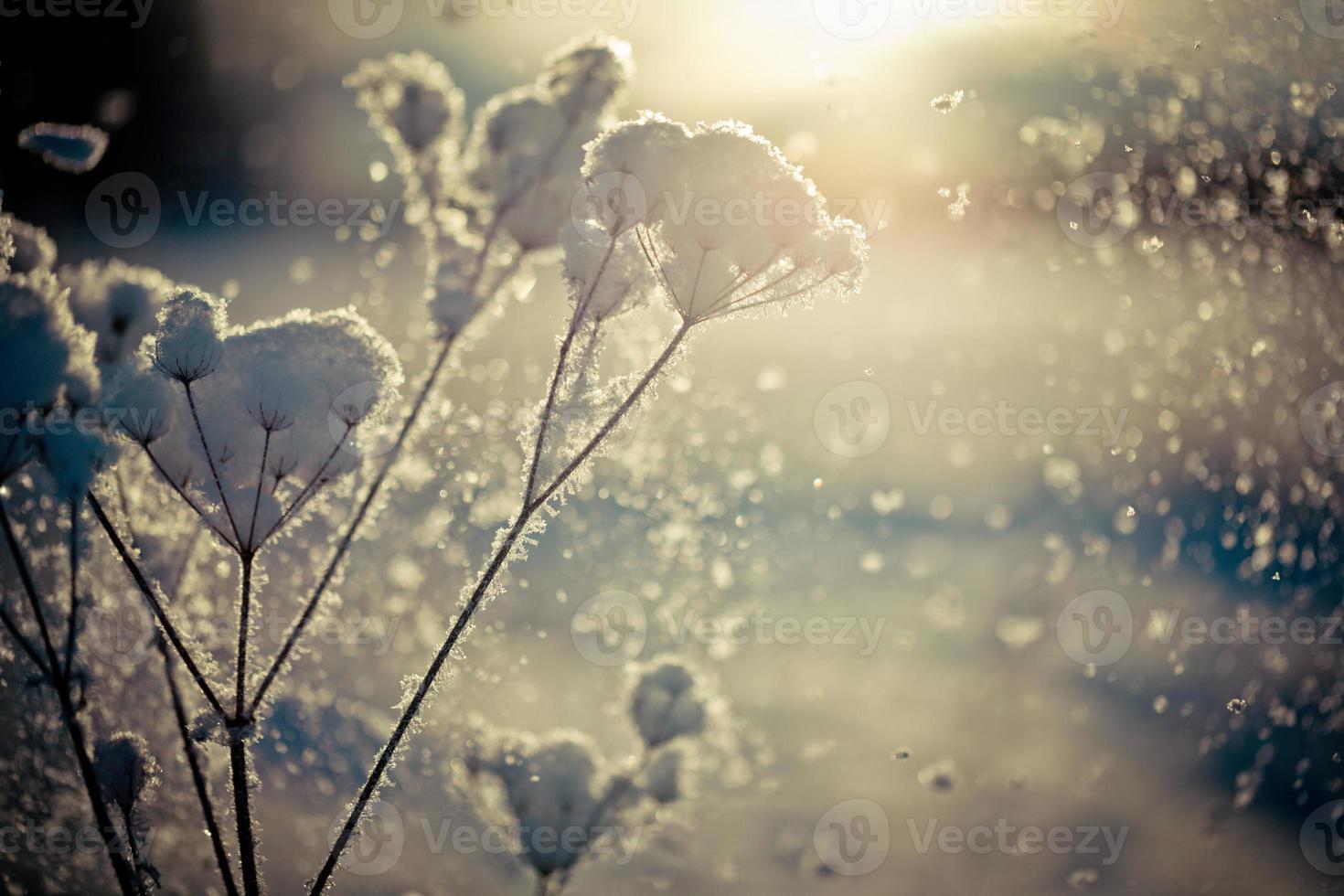 vintergren täckt med snö foto
