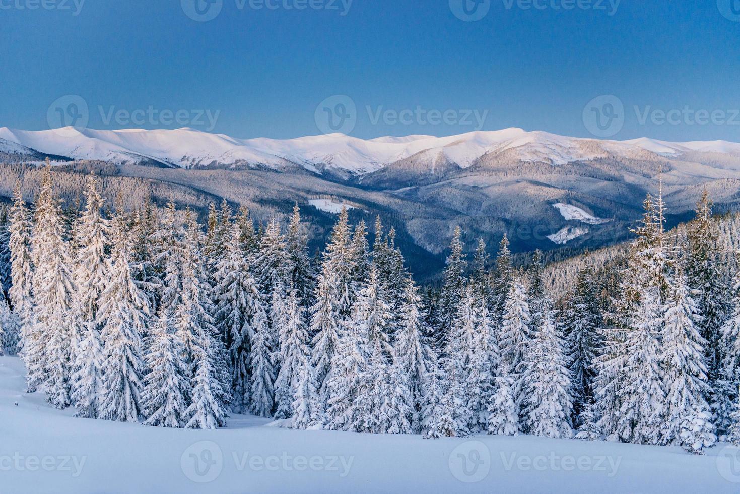 magisk vinter snö täckt träd foto