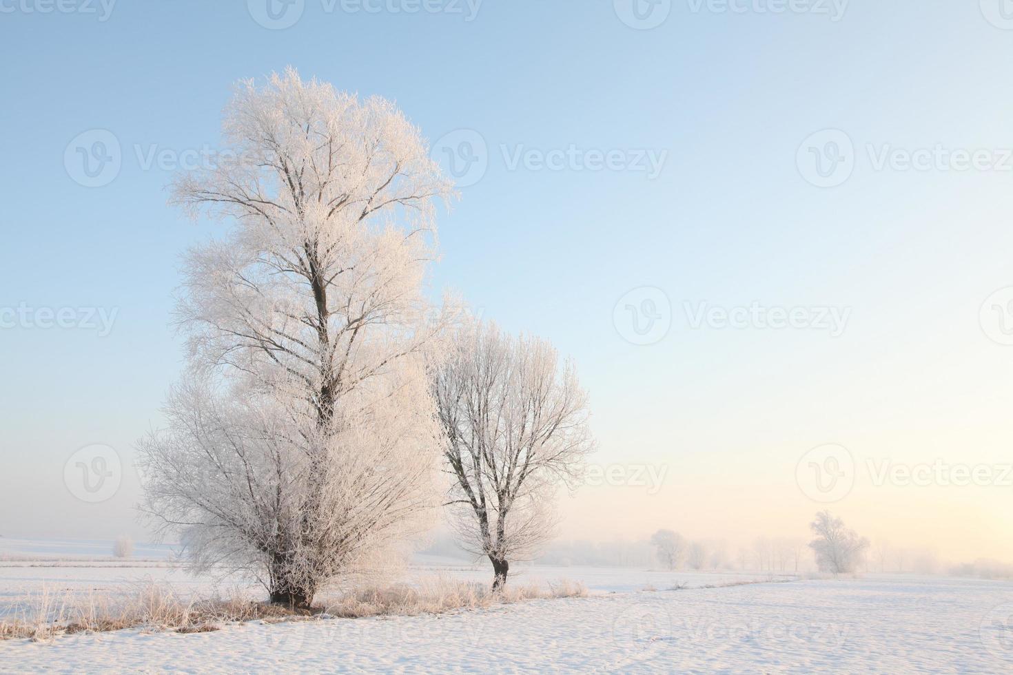 frostiga vinterträd i gryningen foto