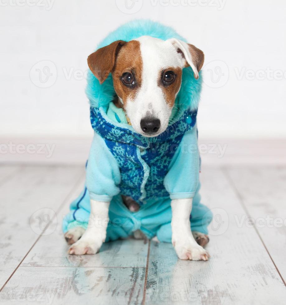 hund i vinterkläder foto