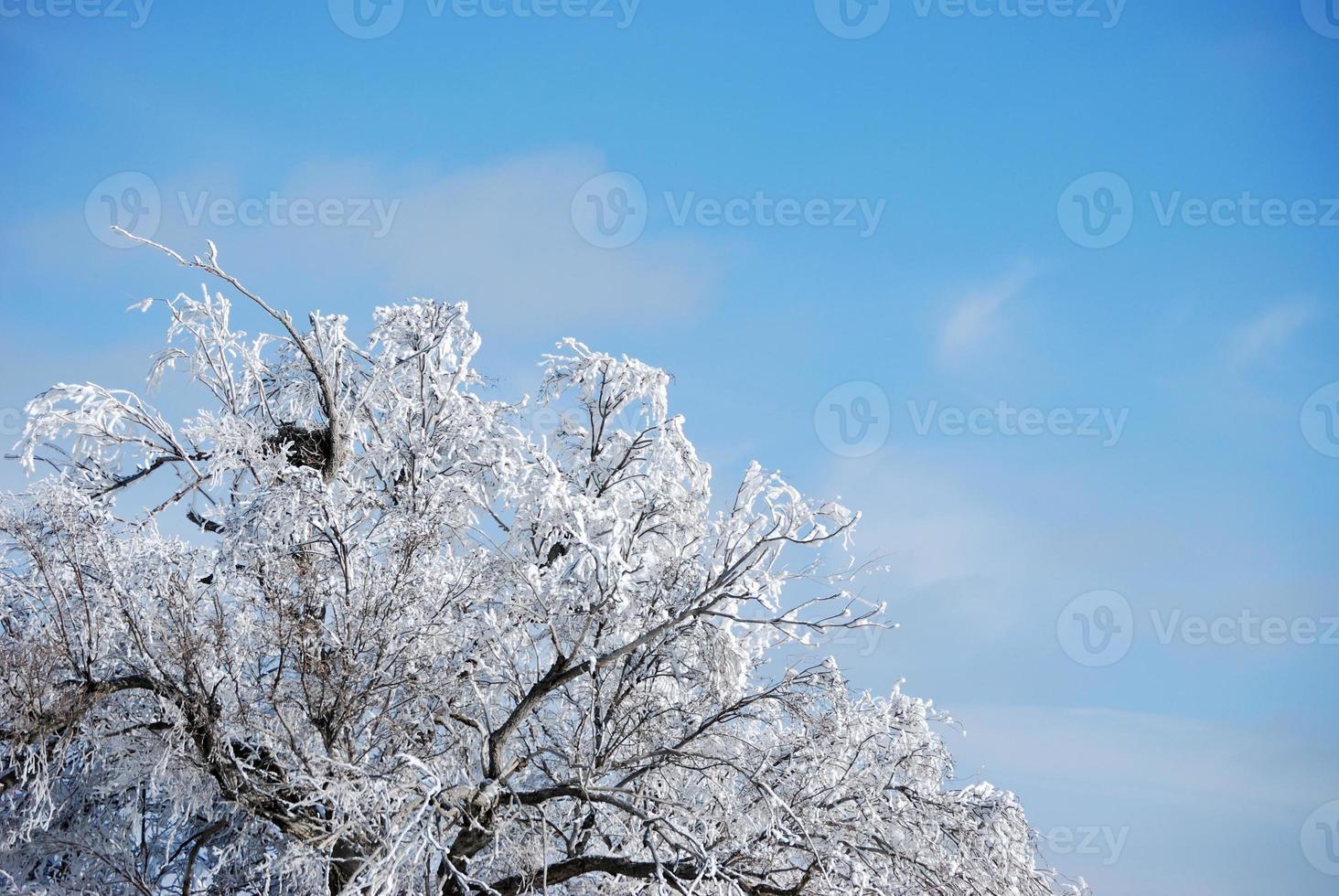 häckar på vintern foto