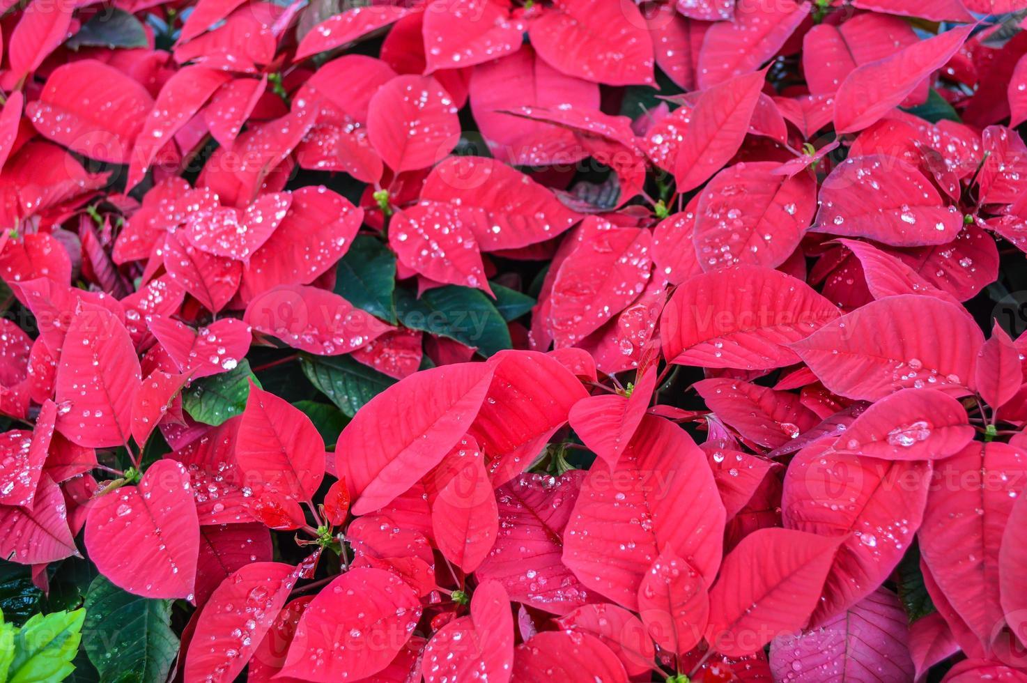 flawer på vintern foto