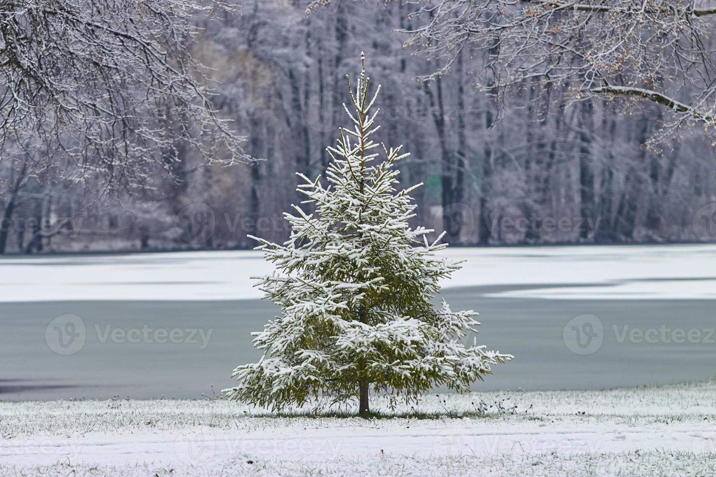 träd, vinter, jul foto