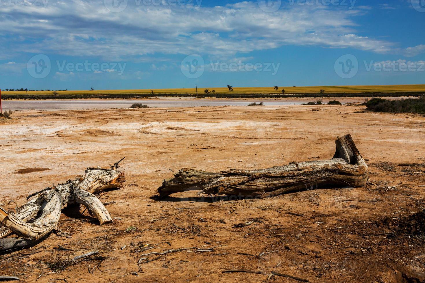 sjö tyrrell nära sjön foto