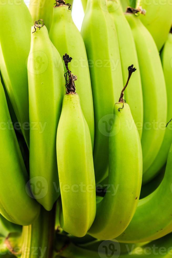 rå bananer foto