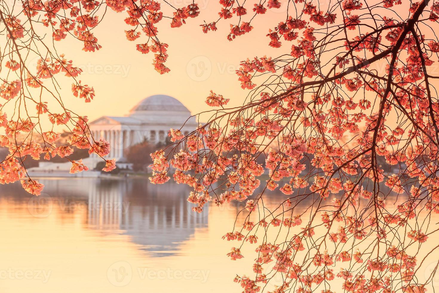Jefferson-minnesmärket under festivalen för körsbärsblommor foto