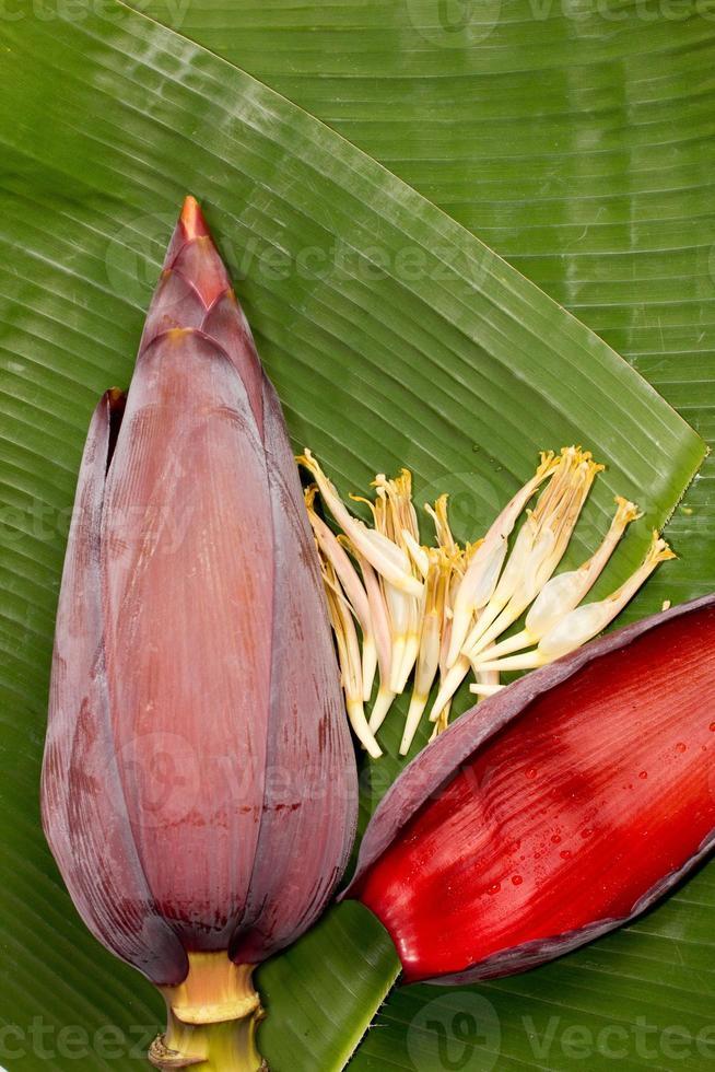 bananblomning foto