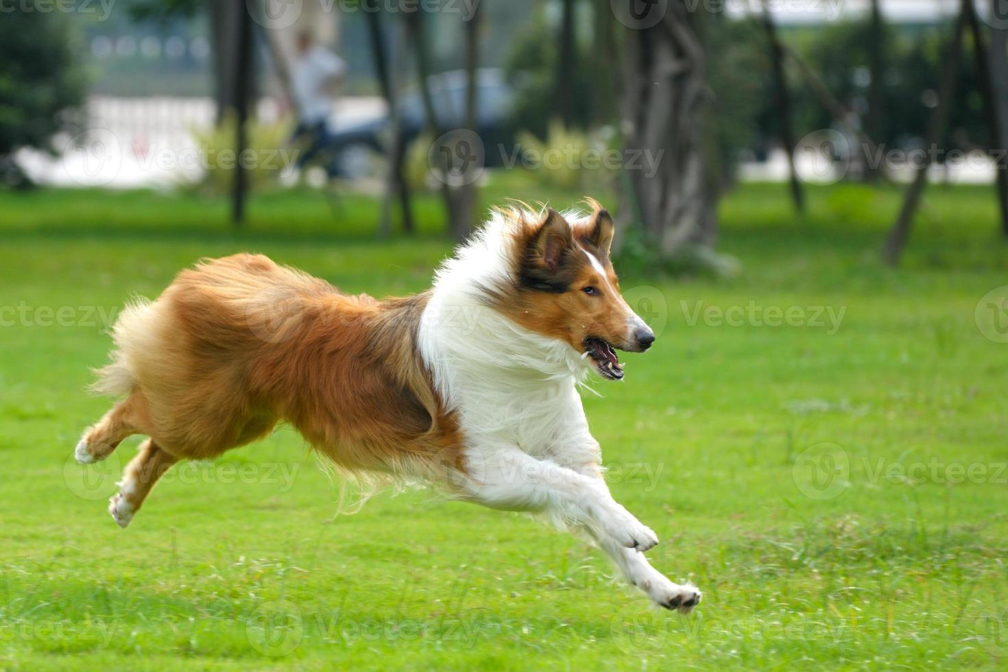 hund springer foto