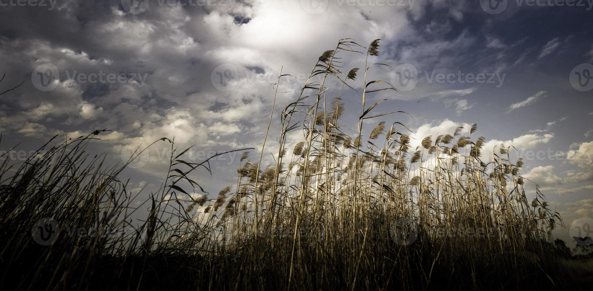 berwick lake melbourne foto