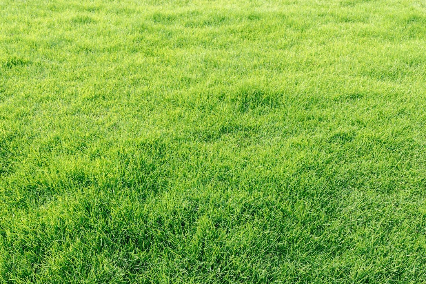 naturligt färskt grönt gräsfält foto