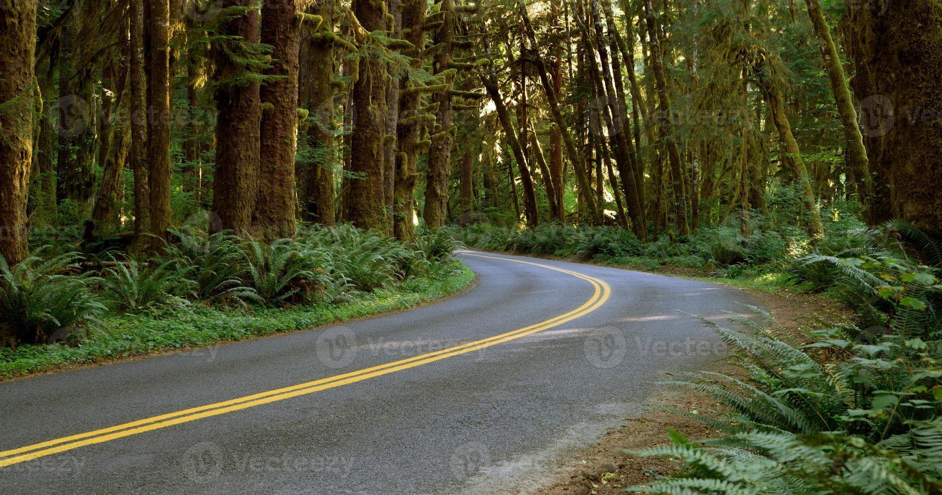 två körfält vägar skär genom regnskogen foto