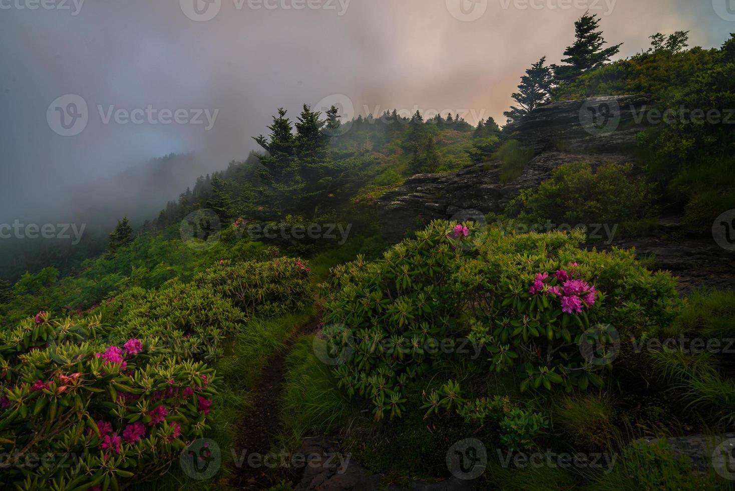 roan berg våren rododenron blommar foto