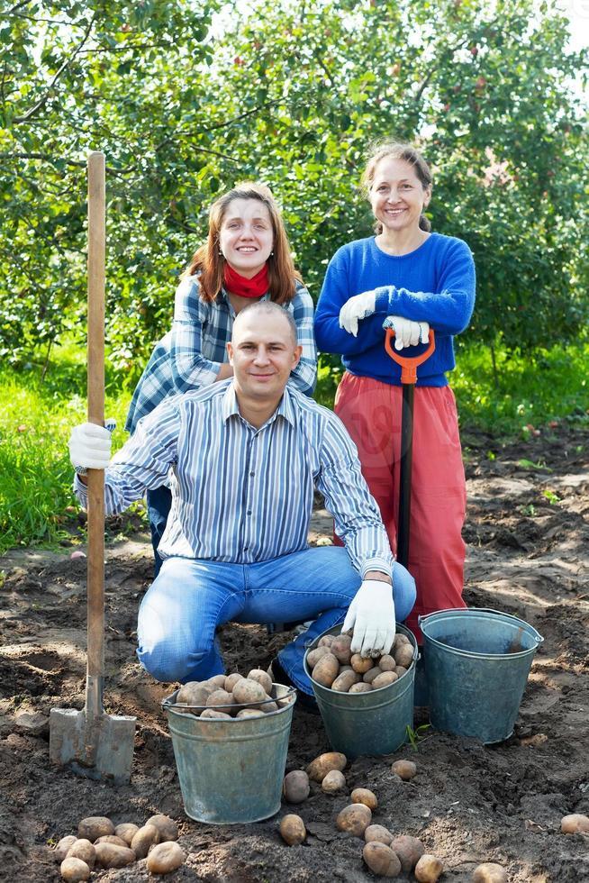 familj med skördade potatis foto