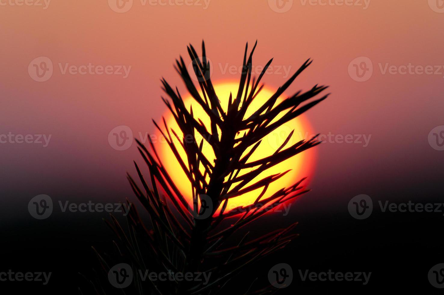 rosa solnedgång foto