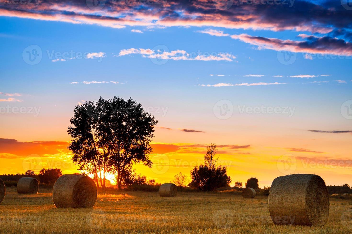 solnedgång fält foto