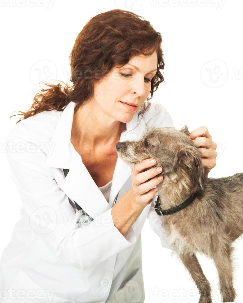 kvinnlig veterinär som undersöker en liten hund foto