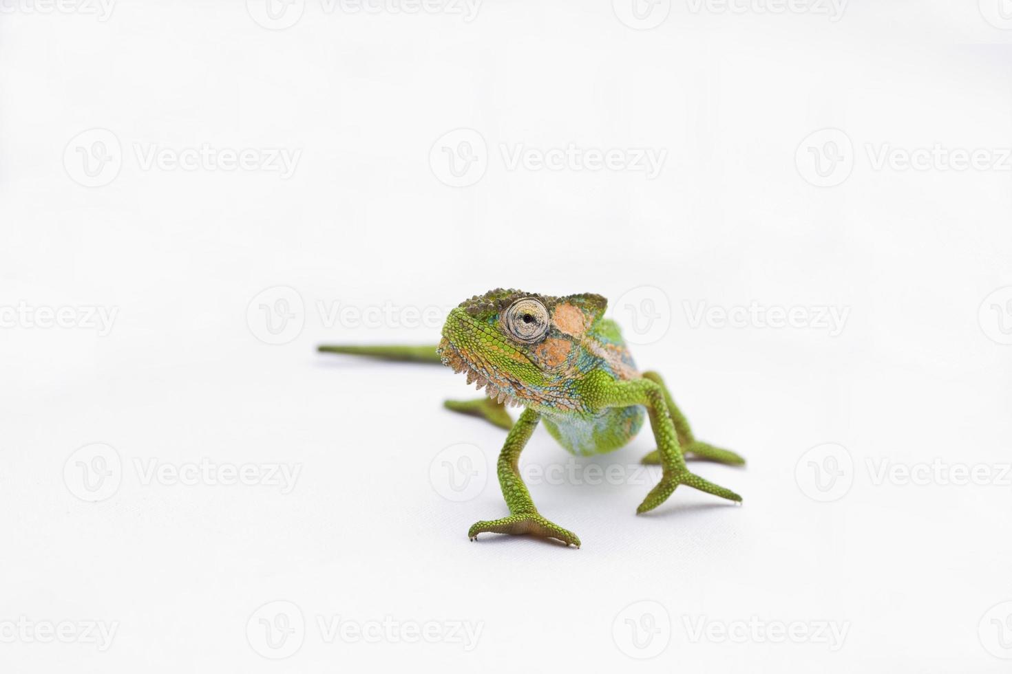 fräck kameleont foto