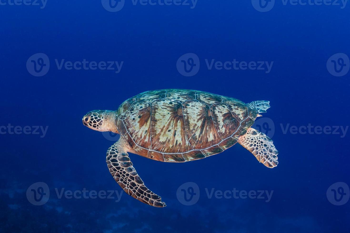 grön sköldpadda som simmar i djupt, blått vatten foto