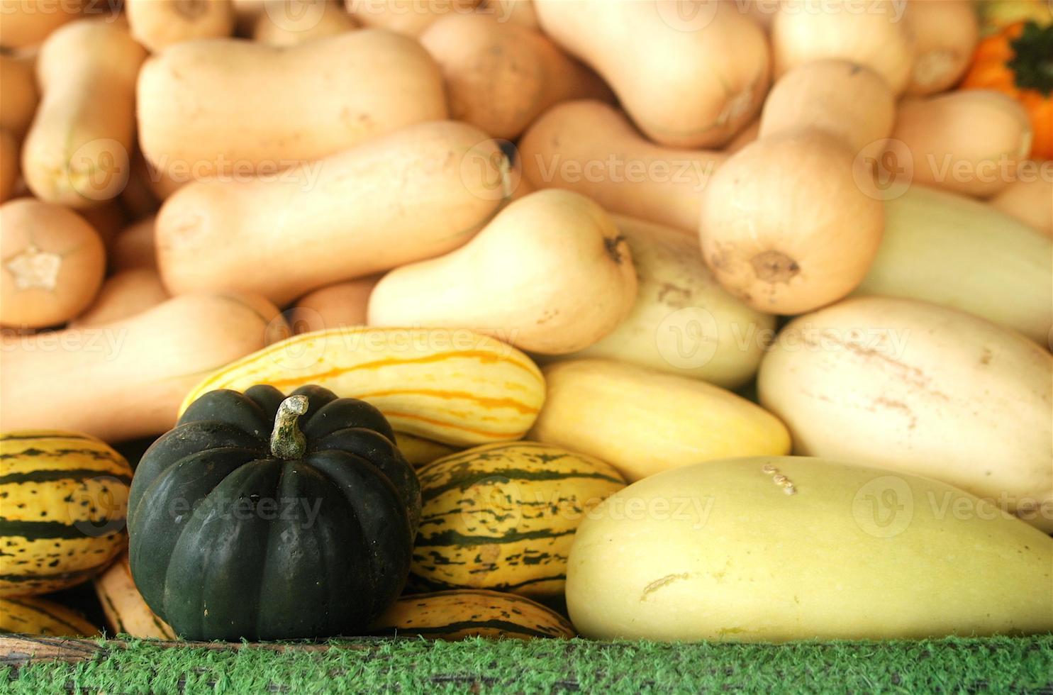 olika squash och kalebasser på en gård foto