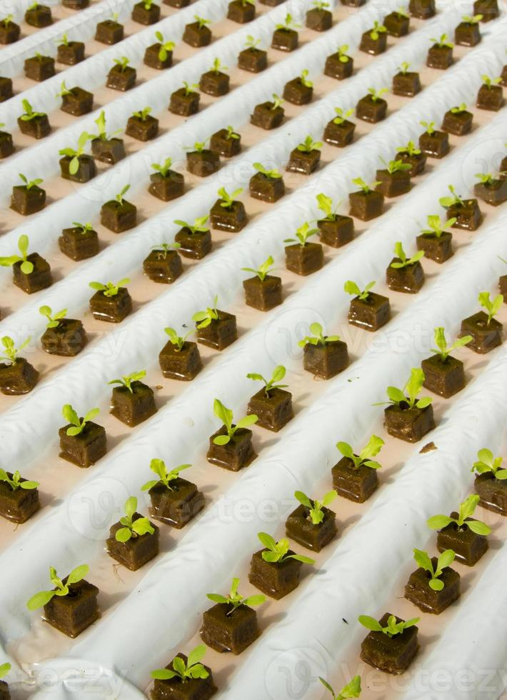 enkelt hydroponic system som växer sallad foto