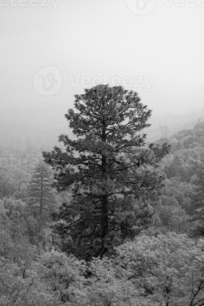 träd foto