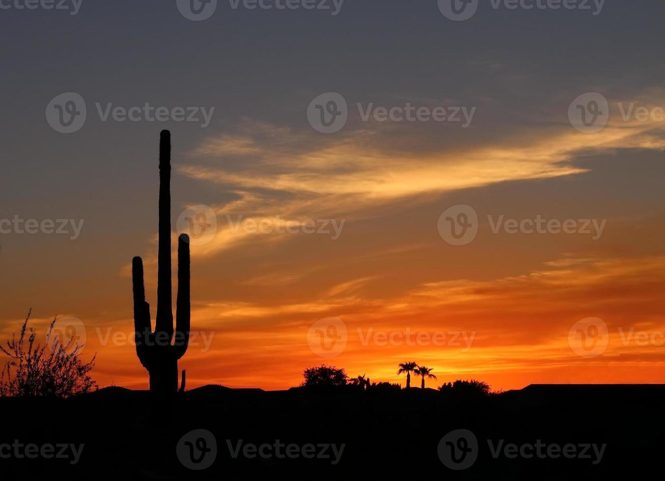 solnedgång i öknen foto