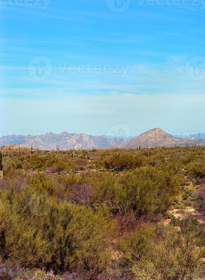 ökenlandskap foto