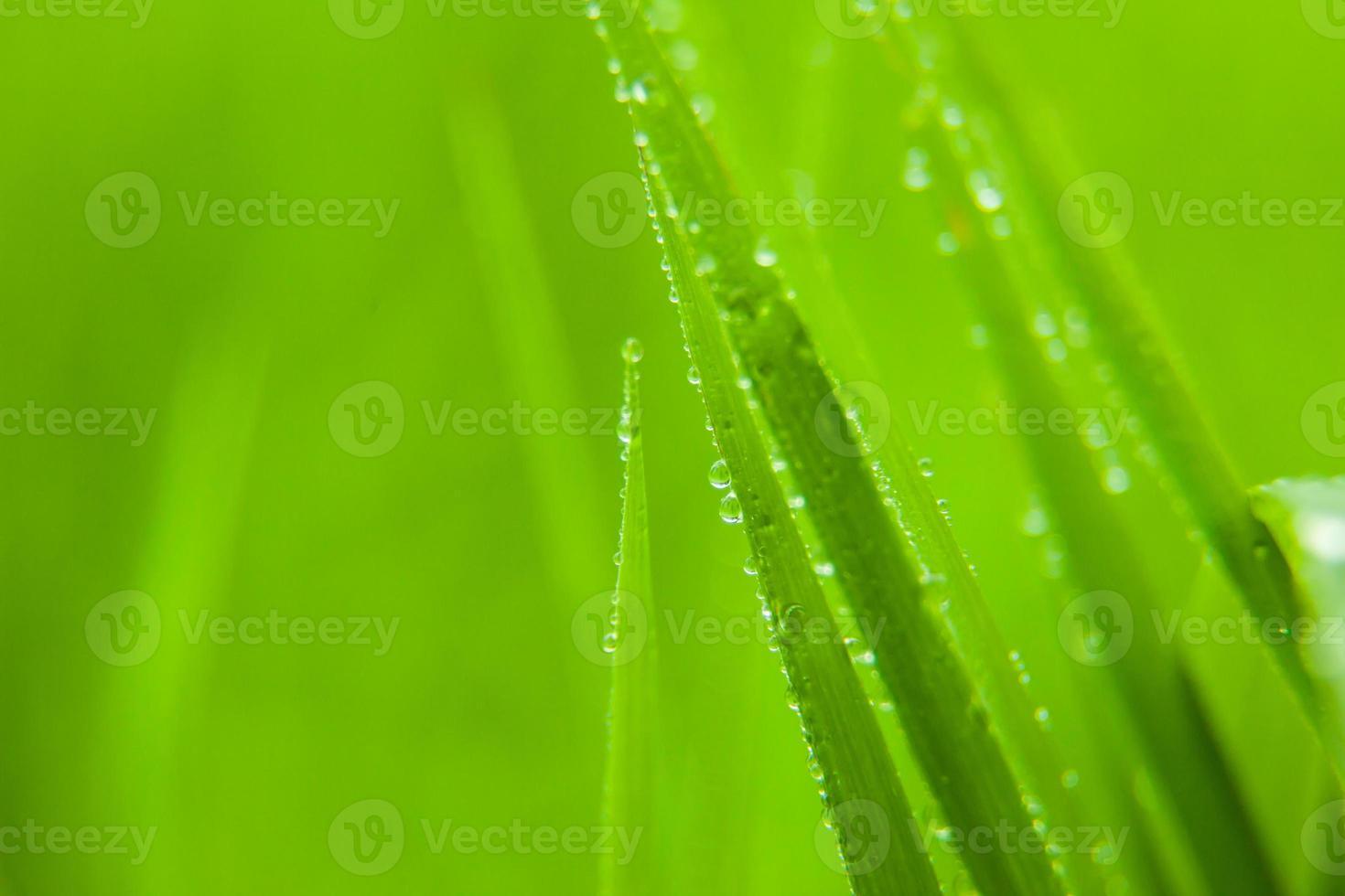 grönt gräs. foto