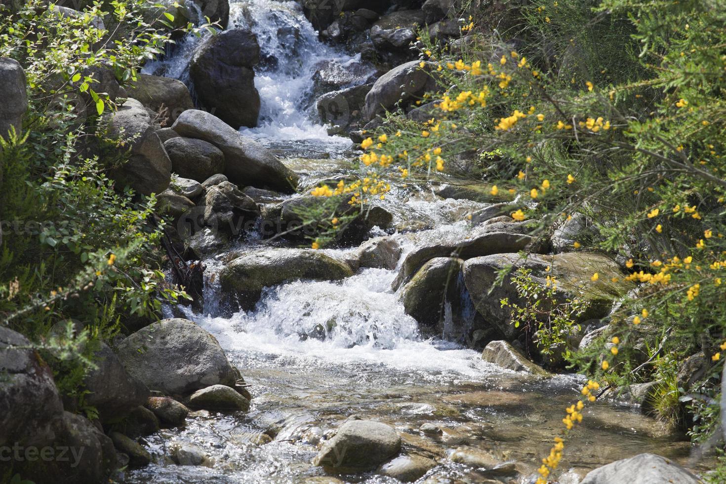 lilla hoppande floden foto