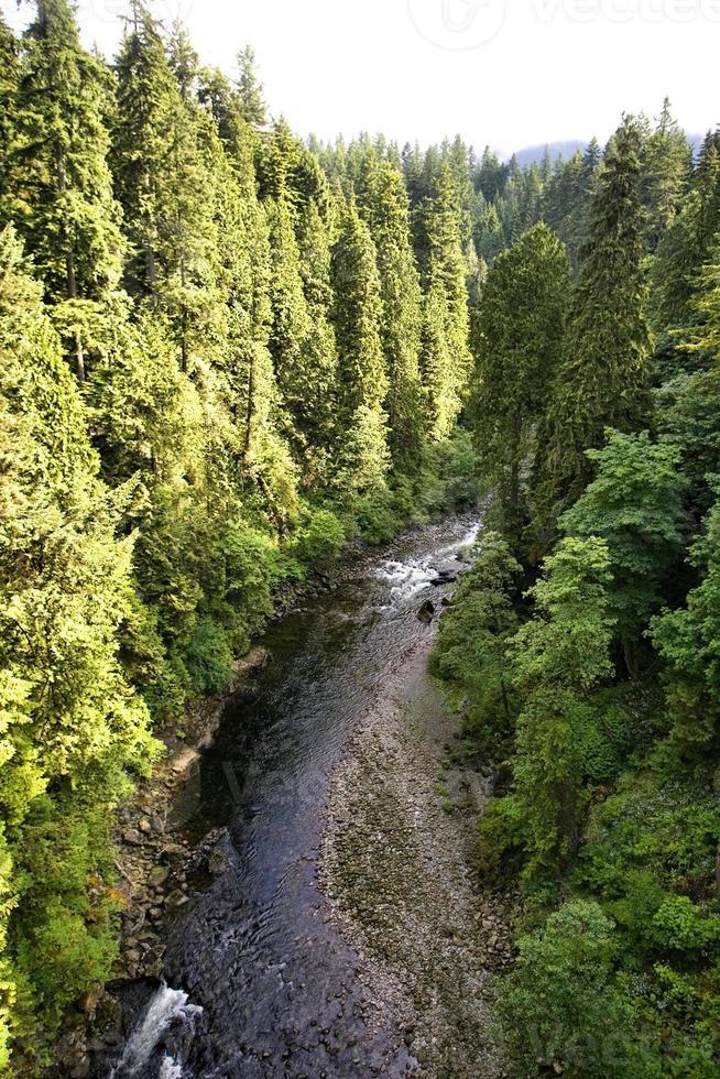 flod genom skogen foto