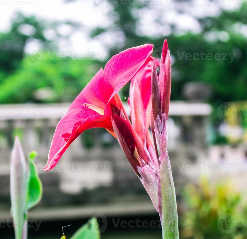 blommor röd flod foto