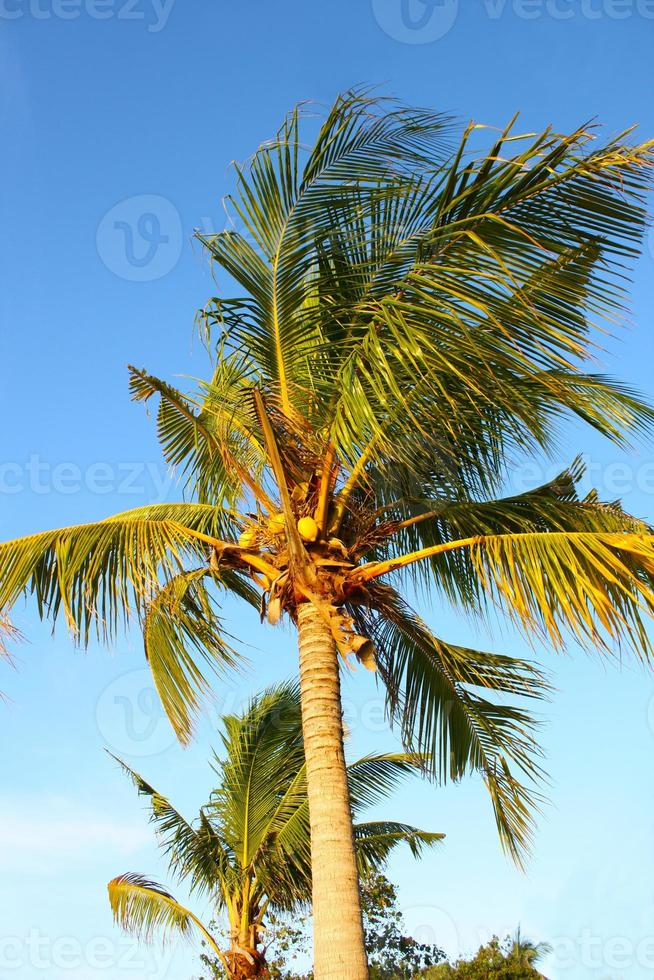 palmträd i Ang Thong National Marine Park, Thailand foto