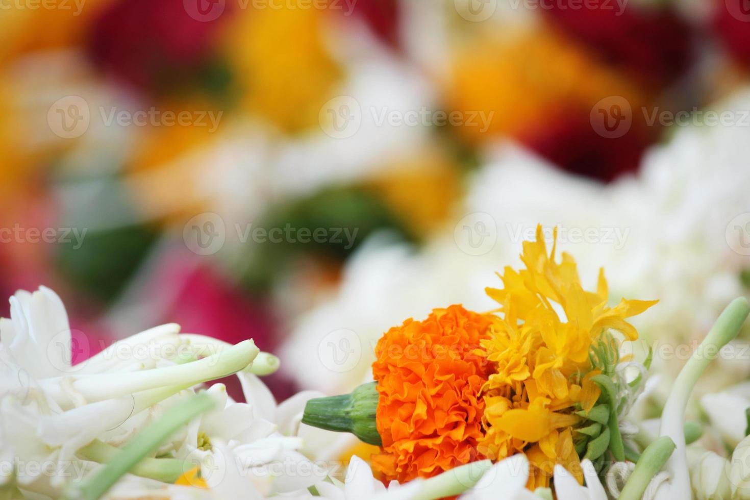 ringblomma med vita blommor foto