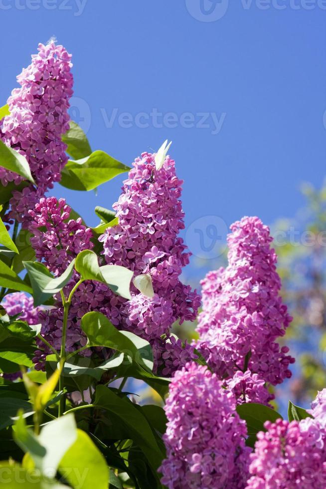 våren foto