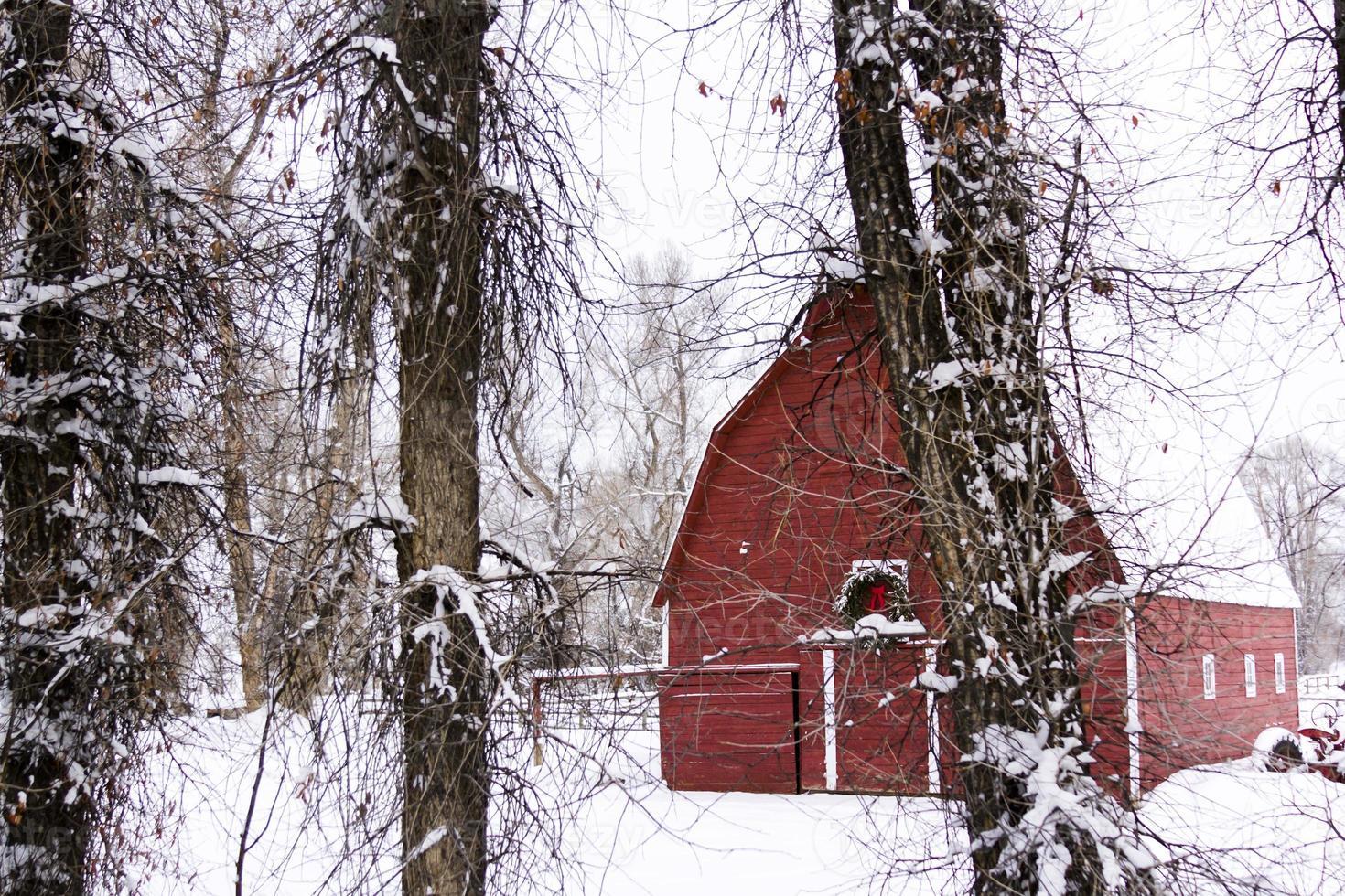 röd ladugård foto