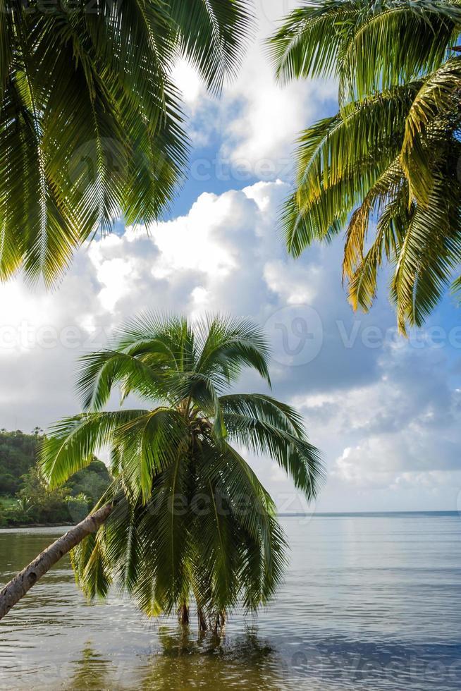 tropiskt landskap foto
