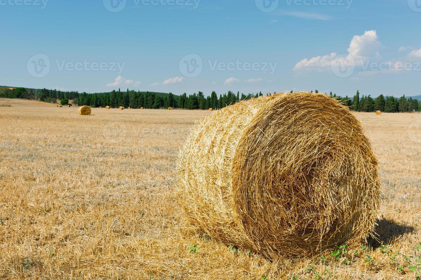 Toscana landskap foto