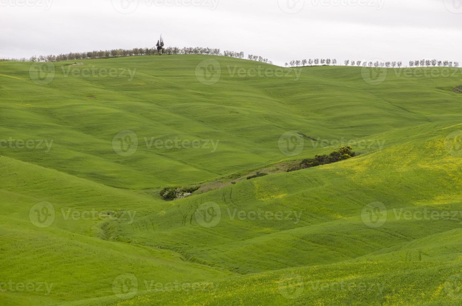 toskanska landskapet foto