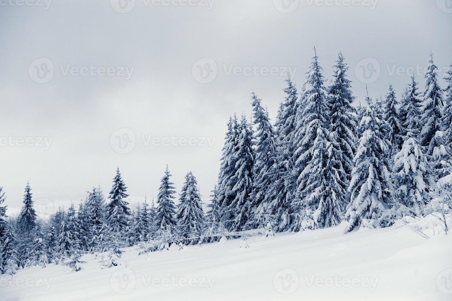 vinterlandskap foto