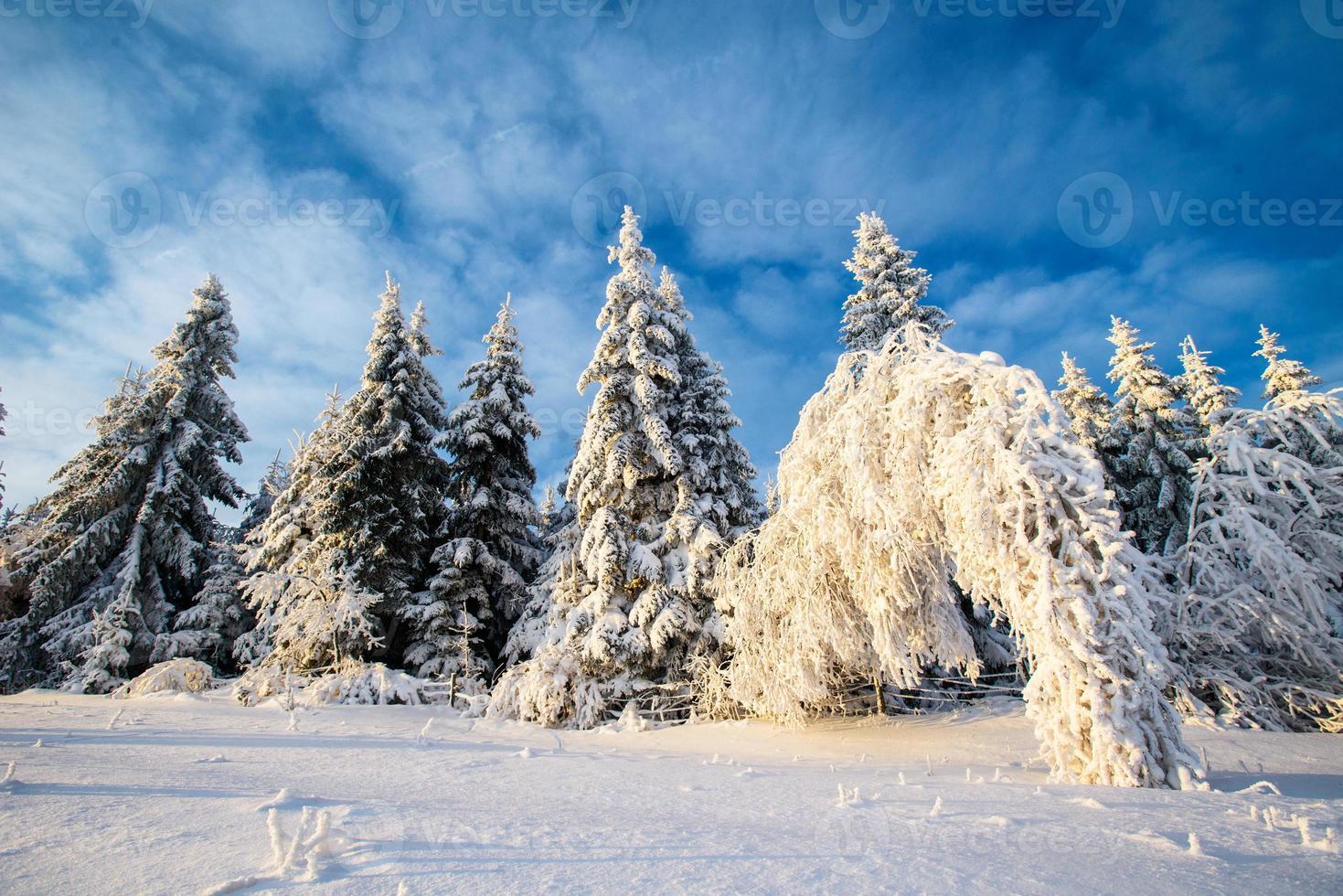 magisk vinter foto